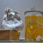 laura mcnamara ceramics ark 4